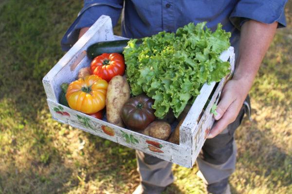 Panier legumes bio Village Potager
