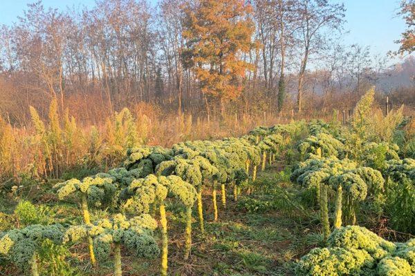 Legumes Village Potager