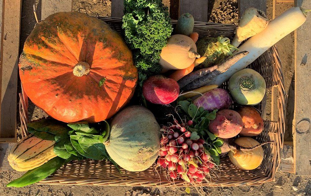 Legumes bio automne