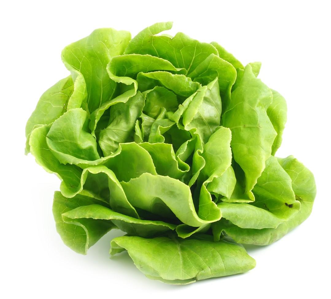 Salades Village Potager
