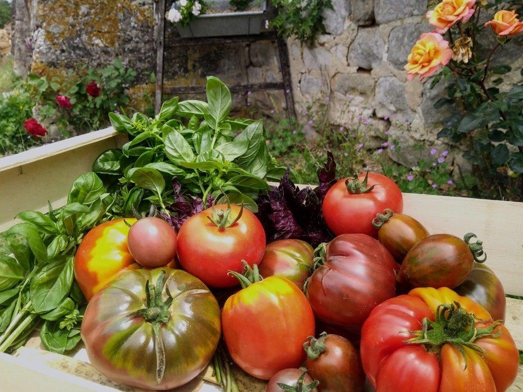 Legumes bio Village Potager